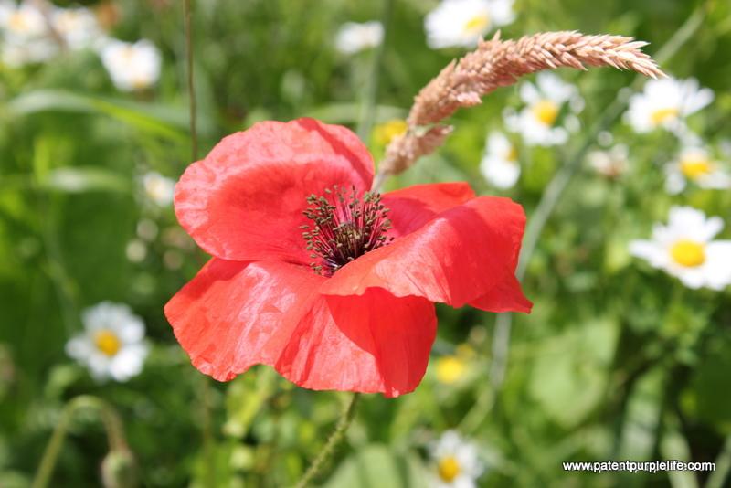 Weleda Poppy