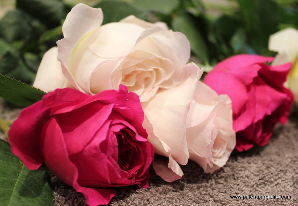 Jurlique david austen roses